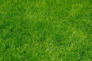 nice-green-lawn