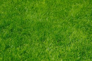 really-green-grass