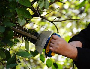 bush-hedging
