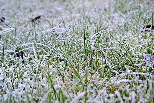 Winter Is Rolling In And Most People Don T Worry About Their Lawns During The Months But Let S Focus On What We Can Do To Prepare Our So They