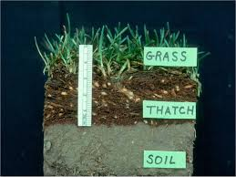 Thatch Layer Visual