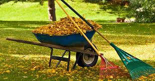 Fall Lawn Cleanup | Why You Should