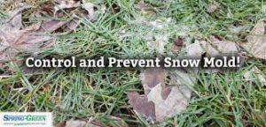 Prevent Snow Mold