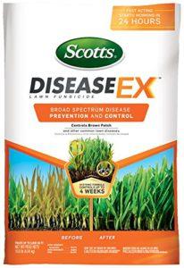 Scotts Disease-Ex