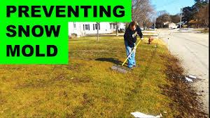 Preventing Snow Mold