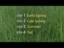 Lawn Care Steps