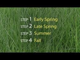 Lawn Care Steps