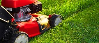 Why It Is Important To Mow Your Lawn Regularly