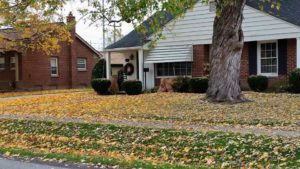 Why you shouldn't leave leaves over the winter