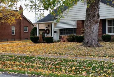Why You Should Not Leave Leaves In Your Yard Over The Winter